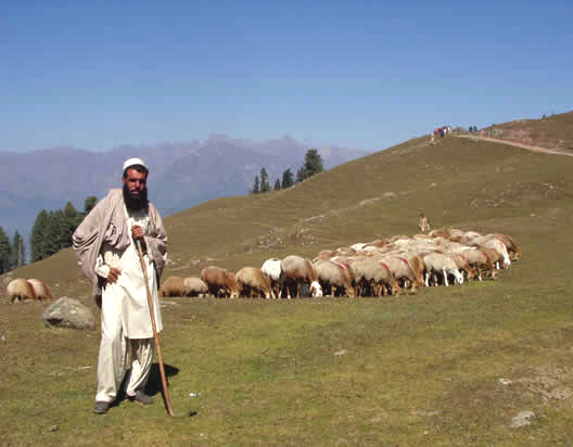 shepherd in east