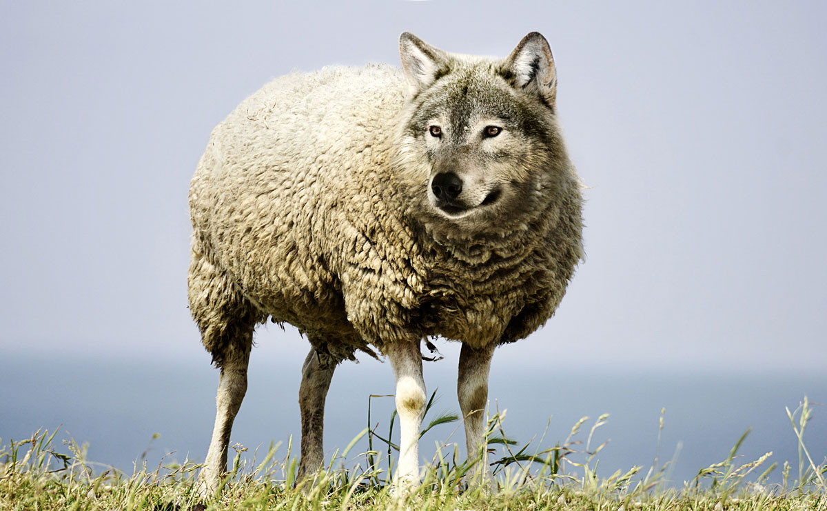 wolf in sheeps clothing 2577813 1920